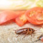 Bahaya untuk Kesehatan, Berikut 5 Cara Membasmi Kecoa di Rumah
