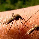 Kerap Kali Mengganggu, Berikut 5 Cara Mengusir Nyamuk Dengan Aman