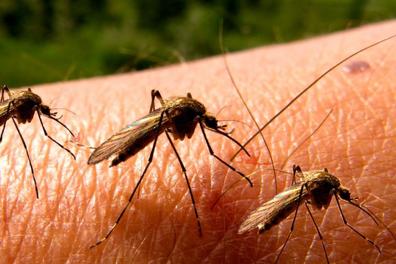 Cara Mengusir Nyamuk Dengan Aman