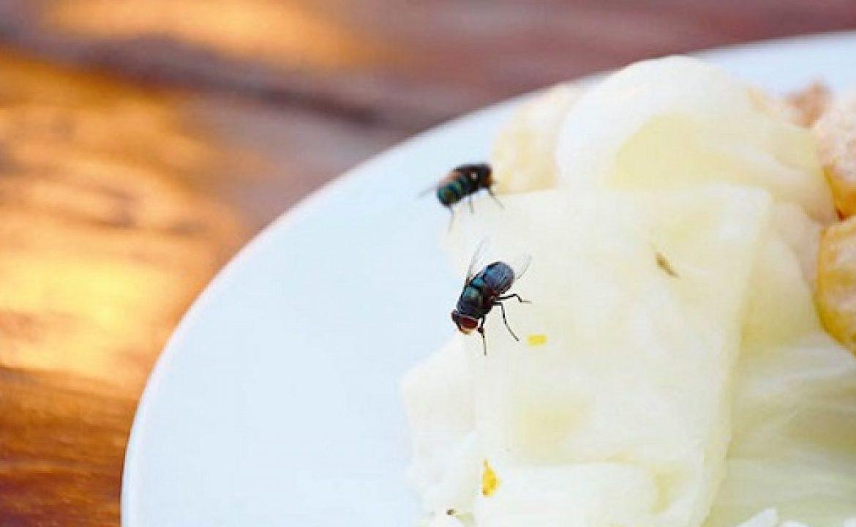 Alasan Mengapa Lalat Masuk Rumah