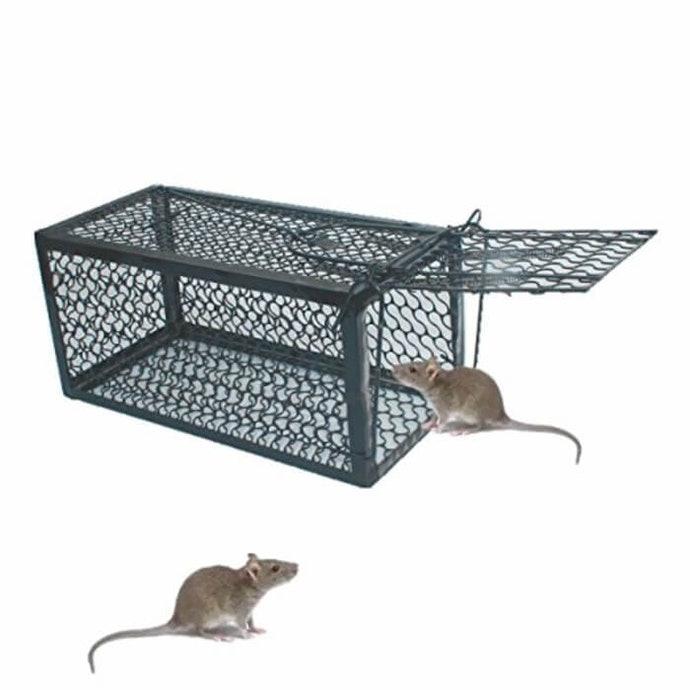 Cara Mengusir Tikus Curut Secara Ampuh