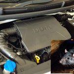 Paling Mudah! Berikut 5 Cara Usir Tikus Dari Kap Mobil Secara Efektif