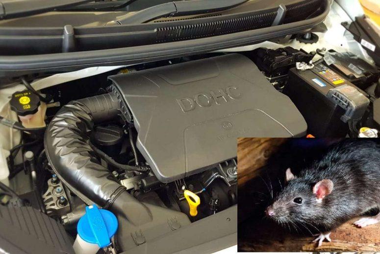 Cara Usir Tikus Dari Kap Mobil Secara Efektif