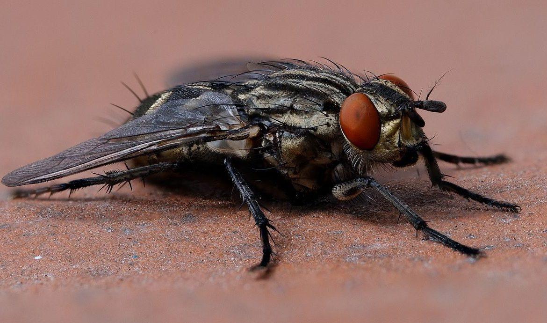 Cara Mengusir Lalat Di Rumah Dengan Mudah