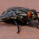 6 Cara Mengusir Lalat Di Rumah Dengan Mudah Dalam Hitungan Menit