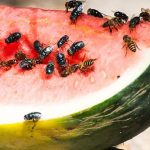 Hadirkan Makanan Sehat, Kenali Cara Mengusir Lalat Di Warung Sebagai Berikut