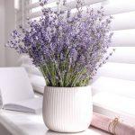 6 Daftar Tanaman Pengusir Lalat Yang Bisa Anda Manfaatkan Di Rumah