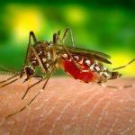Cegah Gigitan Nyamuk, Berikut 4 Cara Yang Bisa Anda Lakukan