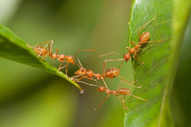 Begini Cara Usir Semut Dari Tanaman
